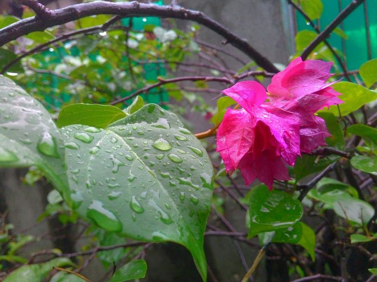 Look gorgeous when rain fell down