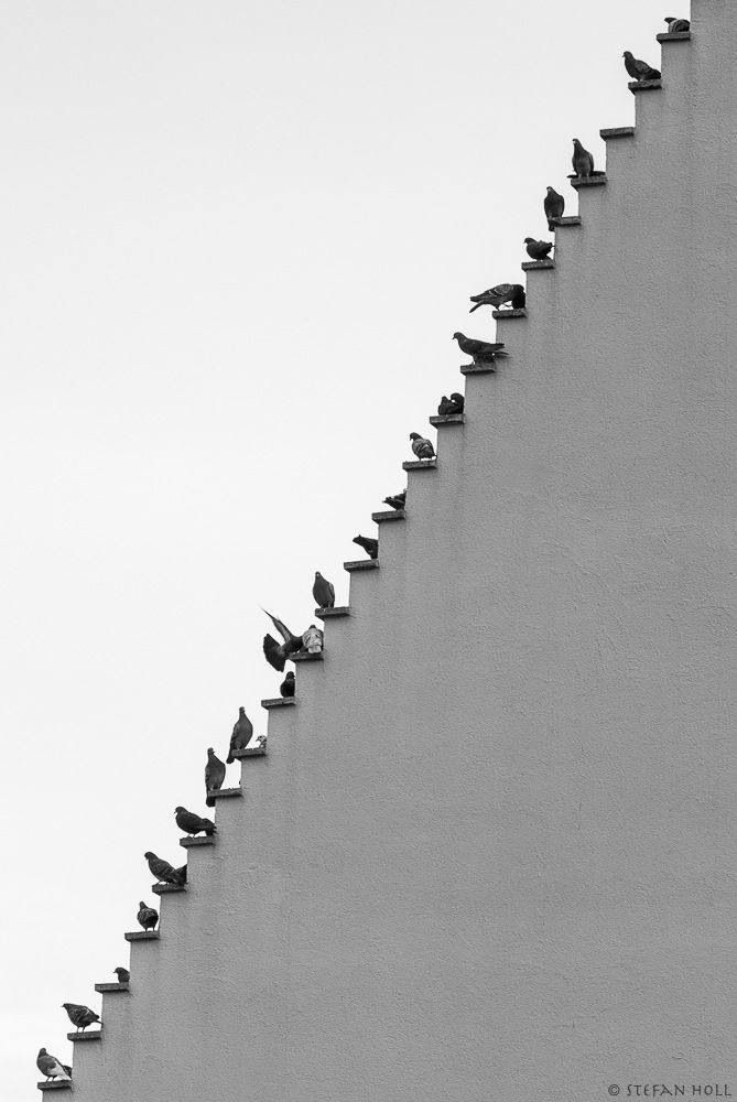 Pichones en la escalera
