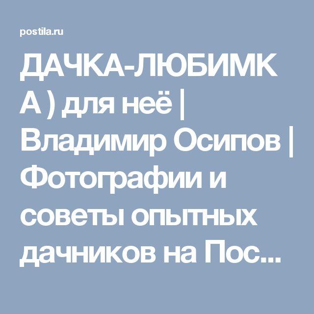 ДАЧКА-ЛЮБИМКА ) для неё   Владимир Осипов   Фотографии и советы опытных дачников на Постиле