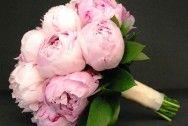 peonia rosa claro