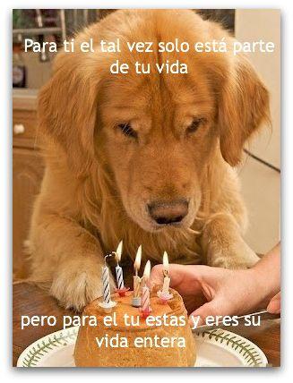 VIDA ENTERA PERRO AMOR CUMPLEAÑOS  DOGS LOVE
