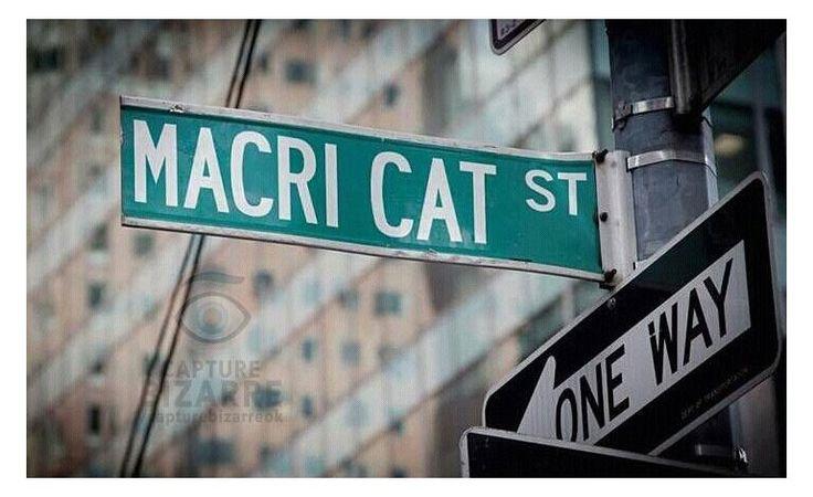 Insólito: el Macri gato llegó hasta la Muralla China | Mauricio Macri