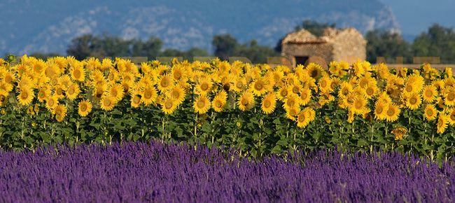 Rendez-vous en Provence - Riviera Francesa