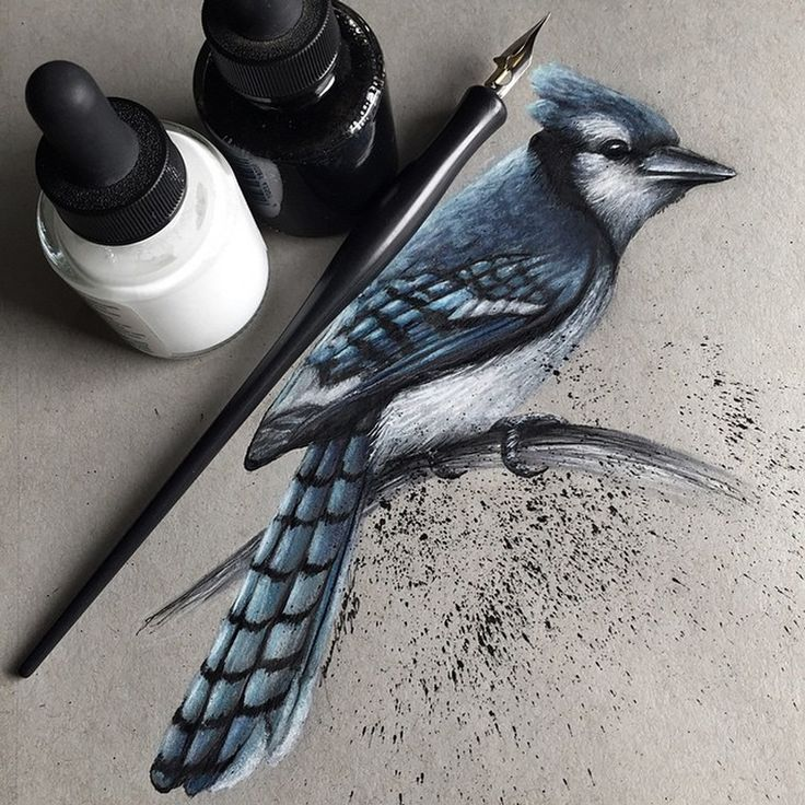 Blue Jay. Realistic Pencil Animal Drawings. By Jonathan Martinez.