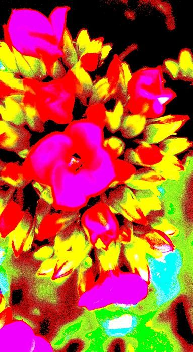 This man drops out  and hope  that it is soil  where he lands.  See how the light  illuminates the red  of the flower.  The light  creates the color.