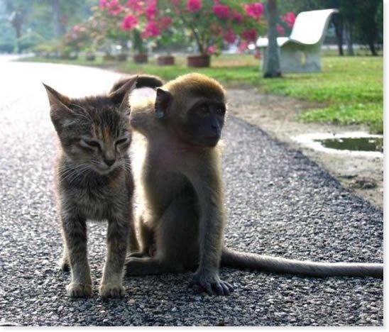 Cats & Monkeys