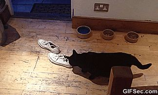 Cat Breeds Funny Gif #7210 - Funny Cat Gifs|Funny Gifs|Cat Gifs