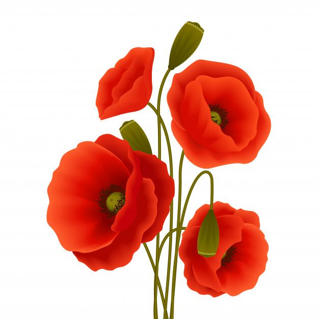 Download Poppy Flower Poster For Free Com Imagens Papoilas Vermelhas Flores De Papoula Papoula
