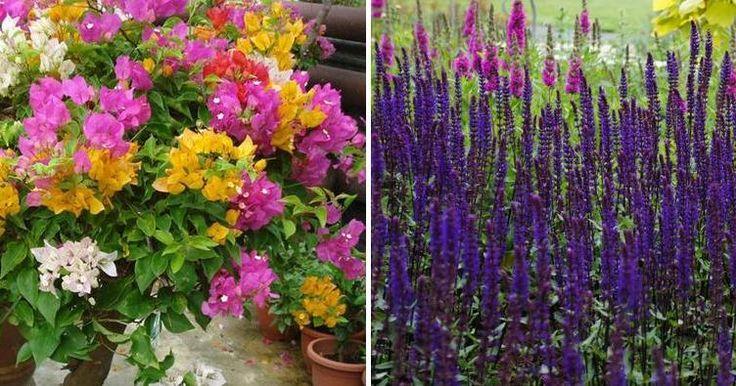 Plantas de floración prolongada para crear vergeles de primavera a otoño