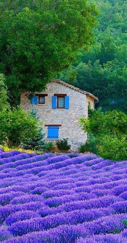 die farbe lila wilmersdorf