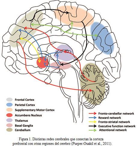 Escuela con cerebro Un espacio de documentación y debate sobre Neurodidáctica