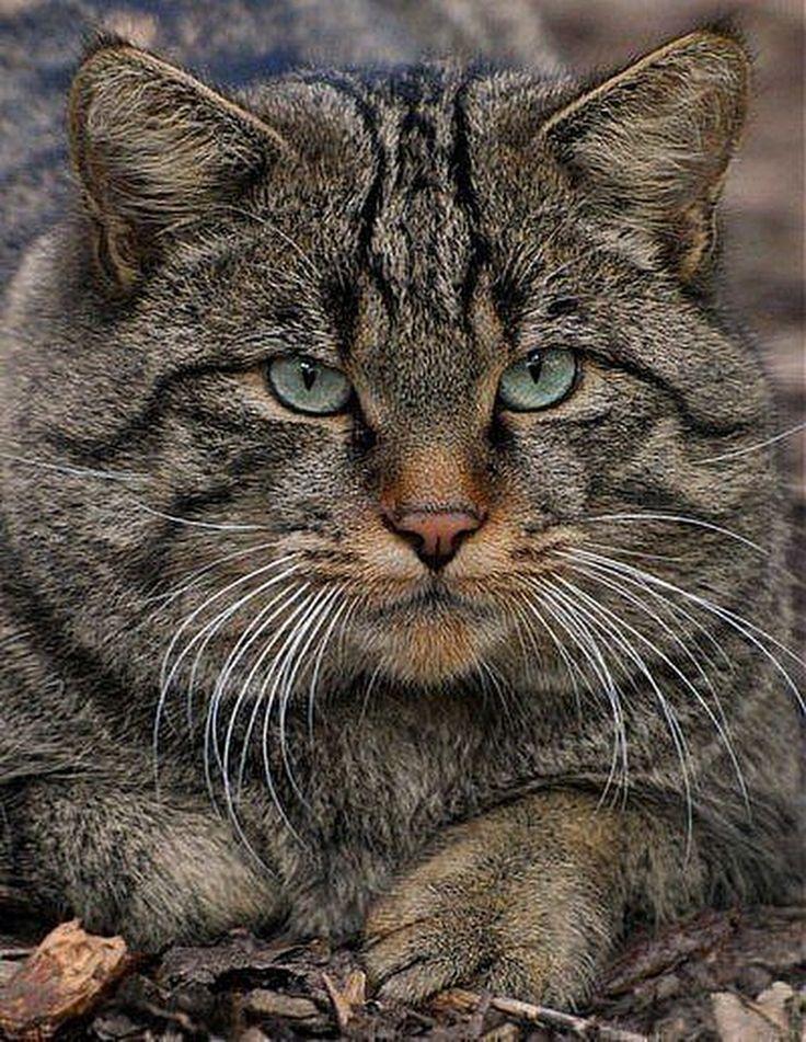 Car Kotov Cats Beautiful Cats Wild Cats
