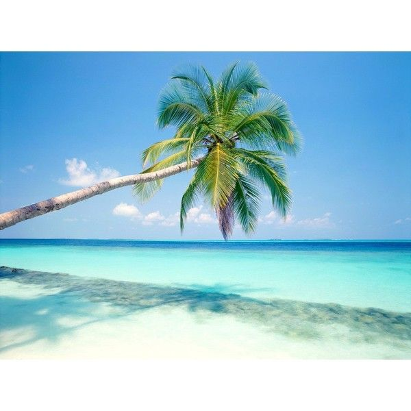 tropical island ❤ liked on Polyvore featuring backgrounds, pictures, blue, achtergrond and blue pictures