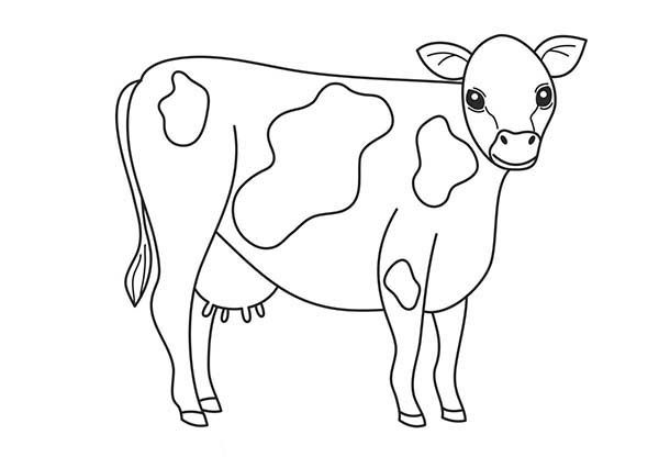 Cow Black And White Cow Complexion Coloring Page Cow Coloring Pages Coloring Pages Superhero Coloring
