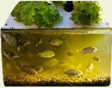 Aquaponics- growing fish and veggies together to reduce or eliminate the cost of hydroponic nutrients.