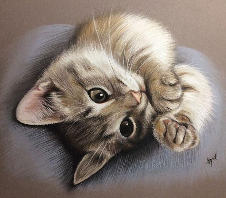#draw #drawing #catportrait #cat #chaton #chat #dessindechat #lespastelsdevir
