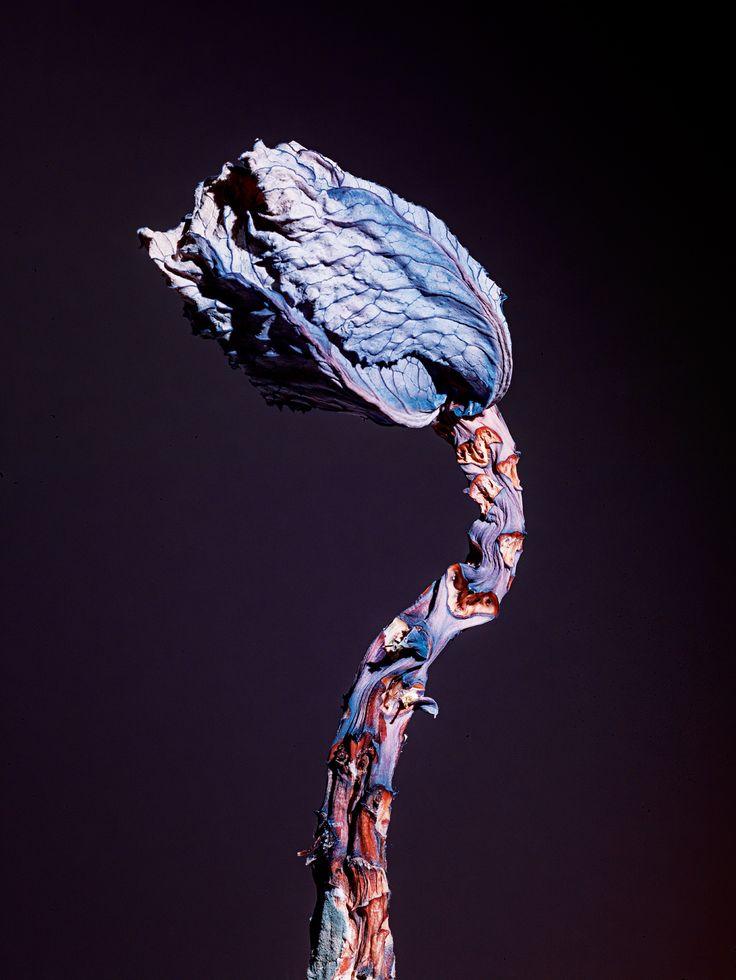 Maldoror, 2014 © Jean-Vincent Simonet