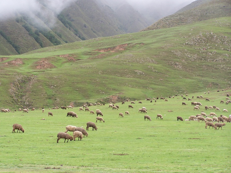 A place close to Tafi del Valle, Tucumán.