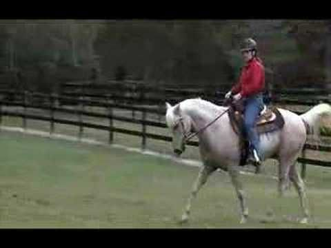 how to teach your horse to carry his head low and relaxed