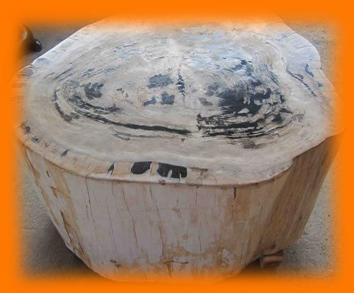 IndoGemstone Fossil Wood Table