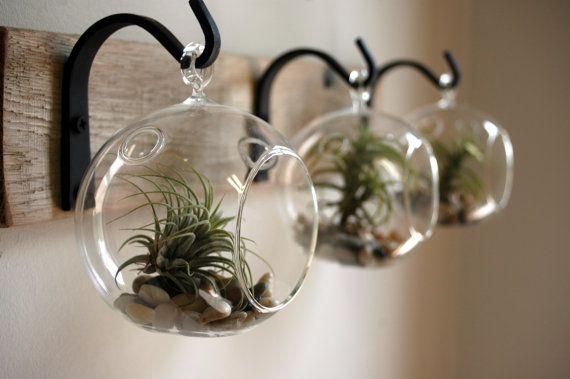 Glass Globe Wall Decor mounted to wood door PineknobsAndCrickets