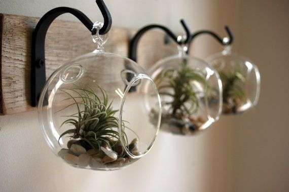 Glass globe wall decor mounted to wood board with wrought for Air plant decoration