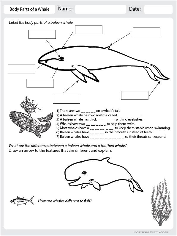 body parts of a whale worksheet click to download the world of animals science school. Black Bedroom Furniture Sets. Home Design Ideas