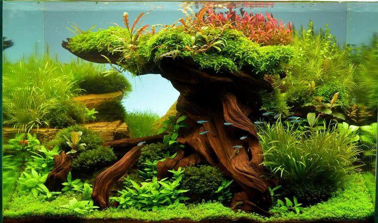 25 einzigartige selber bauen aquarium ideen auf pinterest. Black Bedroom Furniture Sets. Home Design Ideas