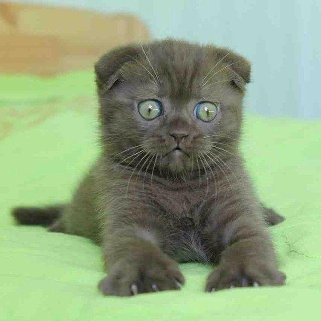 #kucingbikingemes ini kiriman dari : @leroshkazaitseva    punya #kucingbikingemes juga? follow dan tag @kucingbikingemes  jangan lupa pakai #kucingbikingemes   via #catsofinstagram #cat #cats #catofinstagram #cat_of_instagram #catstagram #catsoftheworld #catslover #catgram #catagram #catslife #kucing #kucingku #kucinglucu #kucingsaya #kucingimut