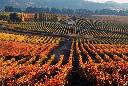 one of the Casa Silva vineyards