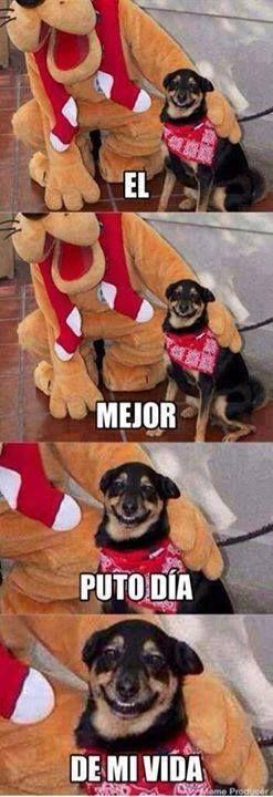 videoswatsapp.com imagenes chistosas videos graciosos memes risas gifs chistes divertidas humor http://chistegraficos.tumblr.com/post/154159809984