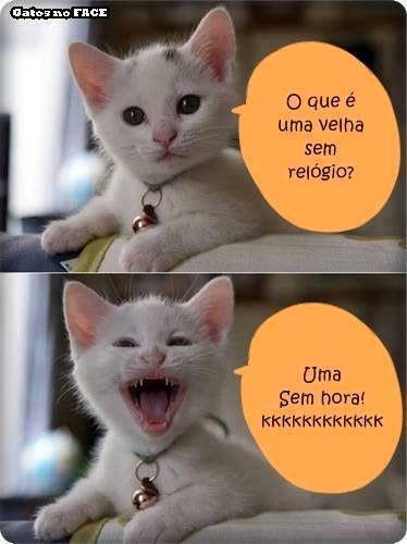 Odeio essa gato, me faz rir sem ter vontade! kkkkk