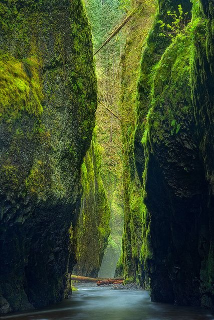 Moss in Oneonta Gorge, Oregon