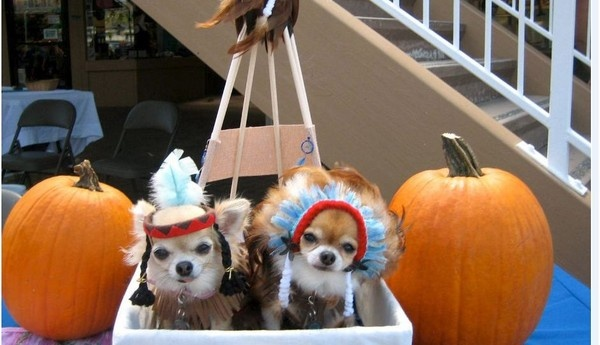 Halloween Dog Photo Contest Winners Announced
