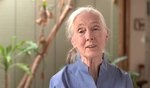 Dr. Jane Goodall's Video Message for the 2012 UN International Day of Peace on Vimeo