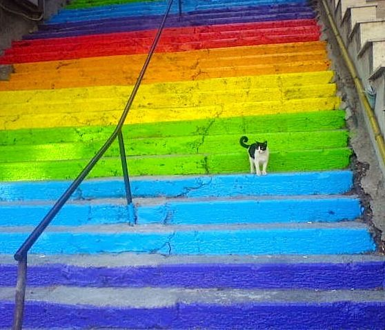 Cat on the Rainbow Stairs in Cihangir, Istanbul