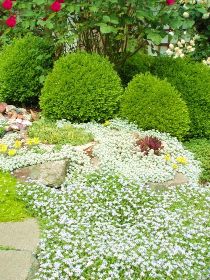Florida Ground Cover Full Sun: 168 Best Images About No Mow On Pinterest