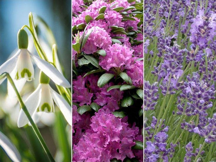 Bemutatjuk hónapokra és tájakra lebontva a legszebb botanikus kerteket Magyarországon.