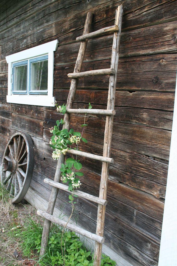 En gammal gärdsgård låg i skräphögen i hörnet av trädgården. Så jag drog fram några störar och gjorde en stege som Kaprifolen kan klättra på.