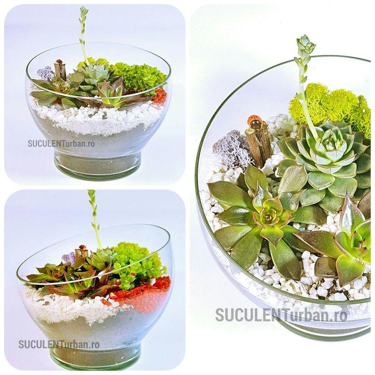 terariu cu plante suculente în cupă  - minigradini