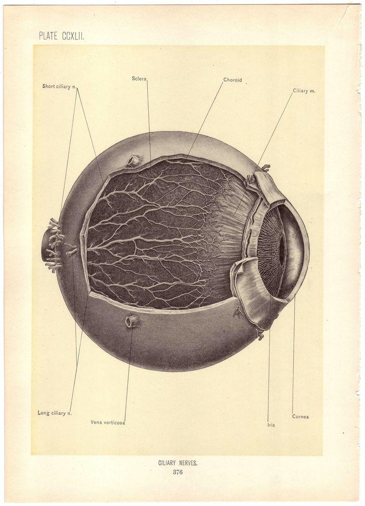 1899 Antique EYE Illustration