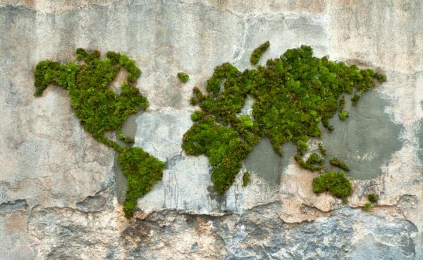 * Mousse graffiti - Planisphère  Entièrement réalisé en mousse et colle végétales, il est écologique et biodégradable.planisphere