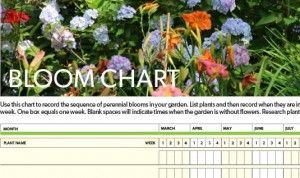 Feature-shot-of-Bloom-chart