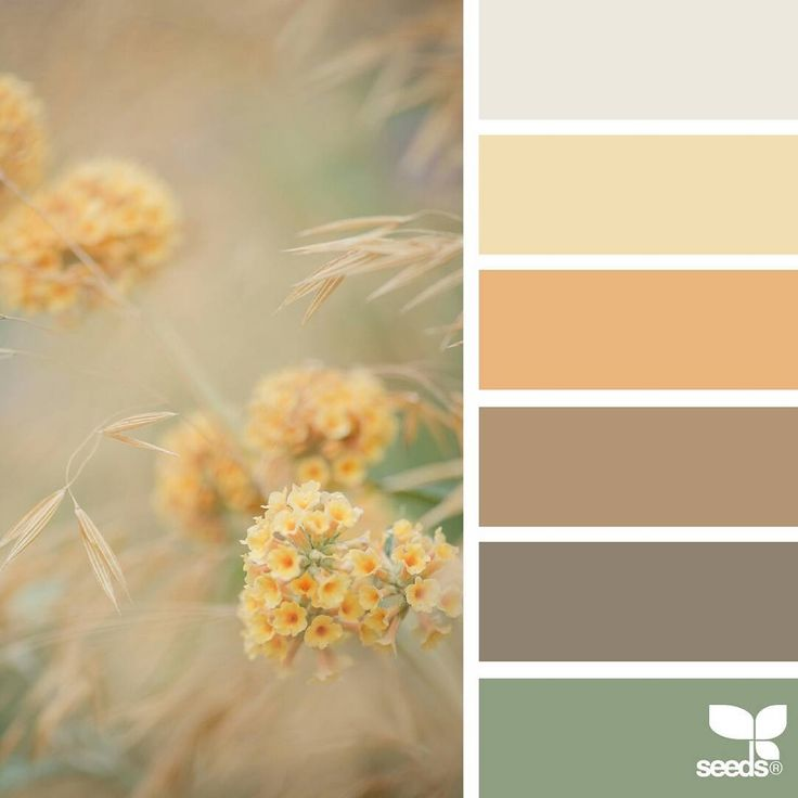 today's inspiration image for { color nature } is by @myfrenchcountrygarden ... thank you, Gea, for sharing your incredible photo in #SeedsColor !