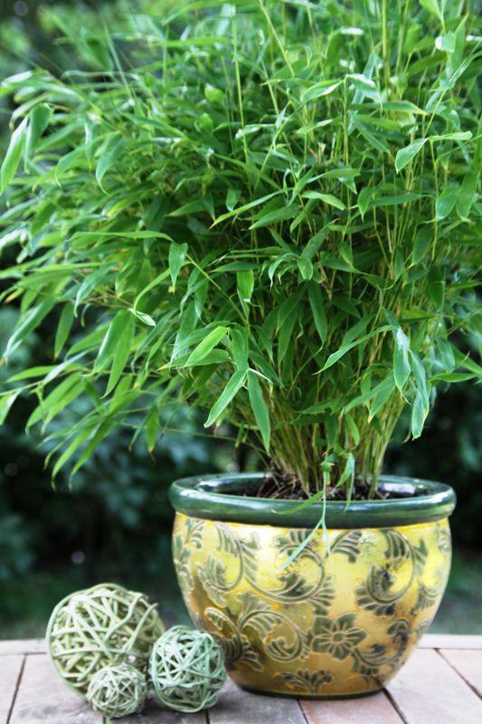 25 bezaubernde azaleen ideen auf pinterest bonsai. Black Bedroom Furniture Sets. Home Design Ideas