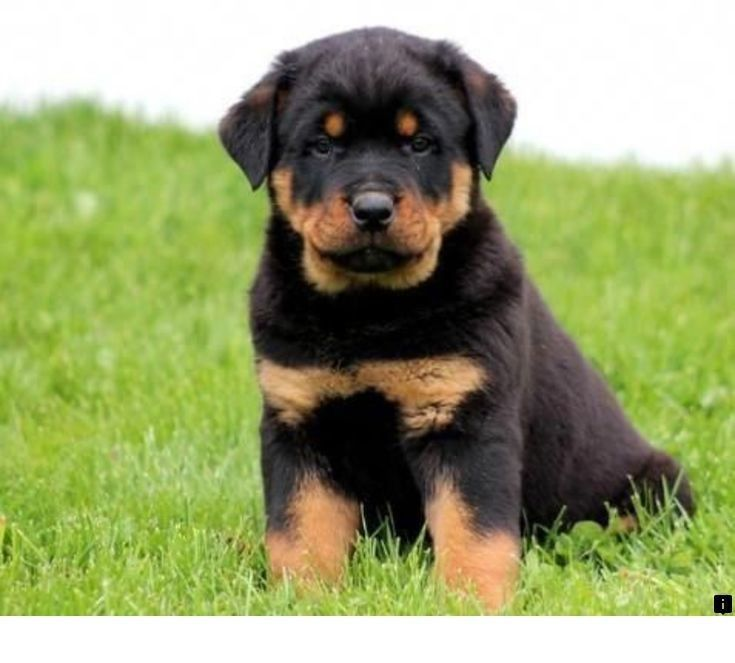 Read About Puppies Follow The Link For More Info Viewing The