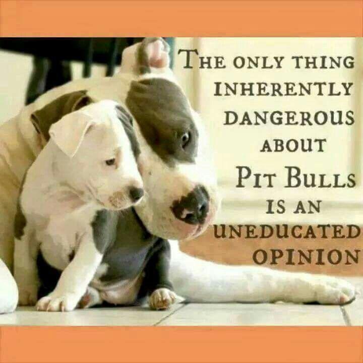 Famous Quotes About Pit Bulls 25+ best Pit bu...