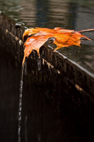 Fall leave photograph...wonderful photo