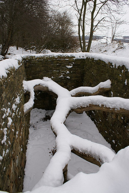 Andy Goldsworthy, Hanging Tree, 2007. Interesting view of this tree in winter. Love the lines.