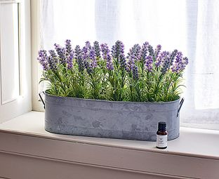 Lavender Windowbox